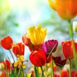 İlkbaharın tazeliği